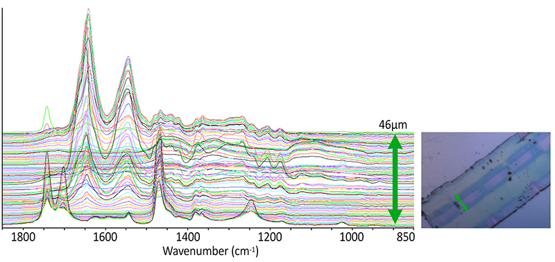 FTIR and Raman infrared spectroscopy material analysis - IR+Raman combines O-PTIR and Raman in these line array measurements of multi-layer film